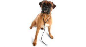veterinarian_dog
