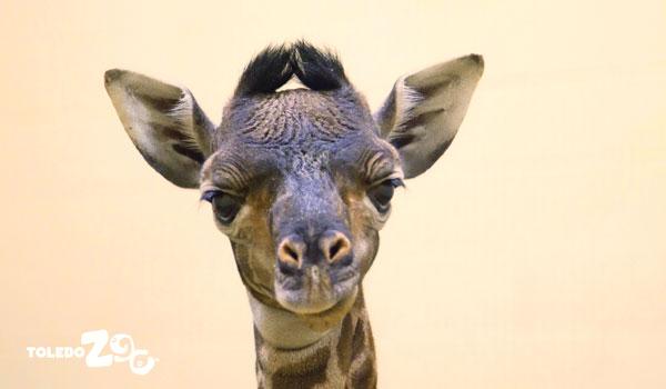 Kipenzi-toledo-zoo