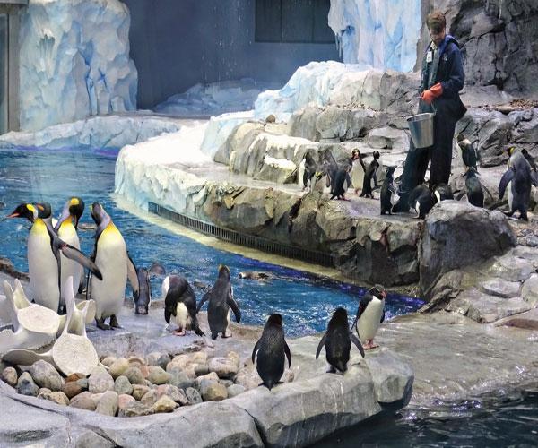 Penguin-Patti-Truesdell