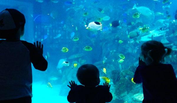 kids-toledo-zoo