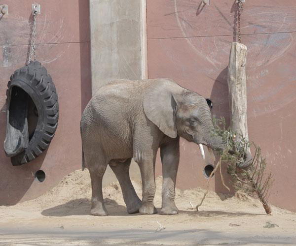 lucas-toledo-zoo
