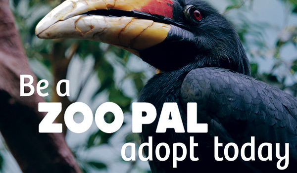 zoo-adoption