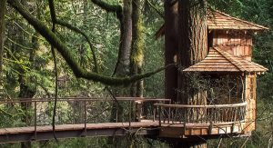 Childhood dreams will come true with the development of the Treehouse Village