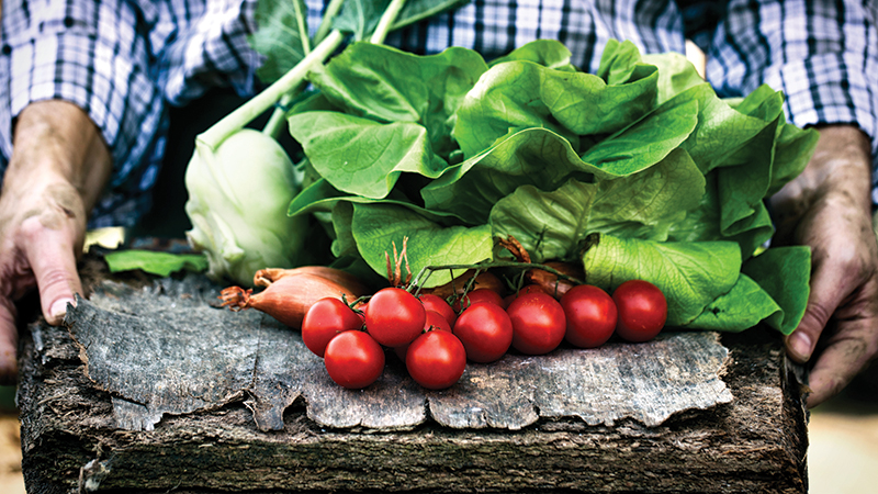 vegetables-P2LDM97
