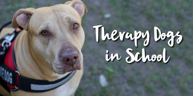 TherapyDogs_Splash_0919