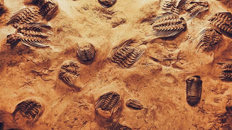 Fossils Park